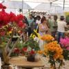 Festival de Flores que explora sentidos vai de 23 até 29 de setembro