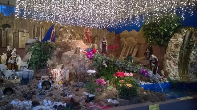 Presépio no Santuário Santa Terezinha tem peixes vivos - Foto: Williana Lascaleia