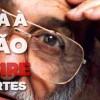 Movimento homenageia professores em nome de ocupação em Embu das Artes - Foto: Reprodução/ Facebook