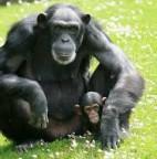macaco barrosoemdia.com.br